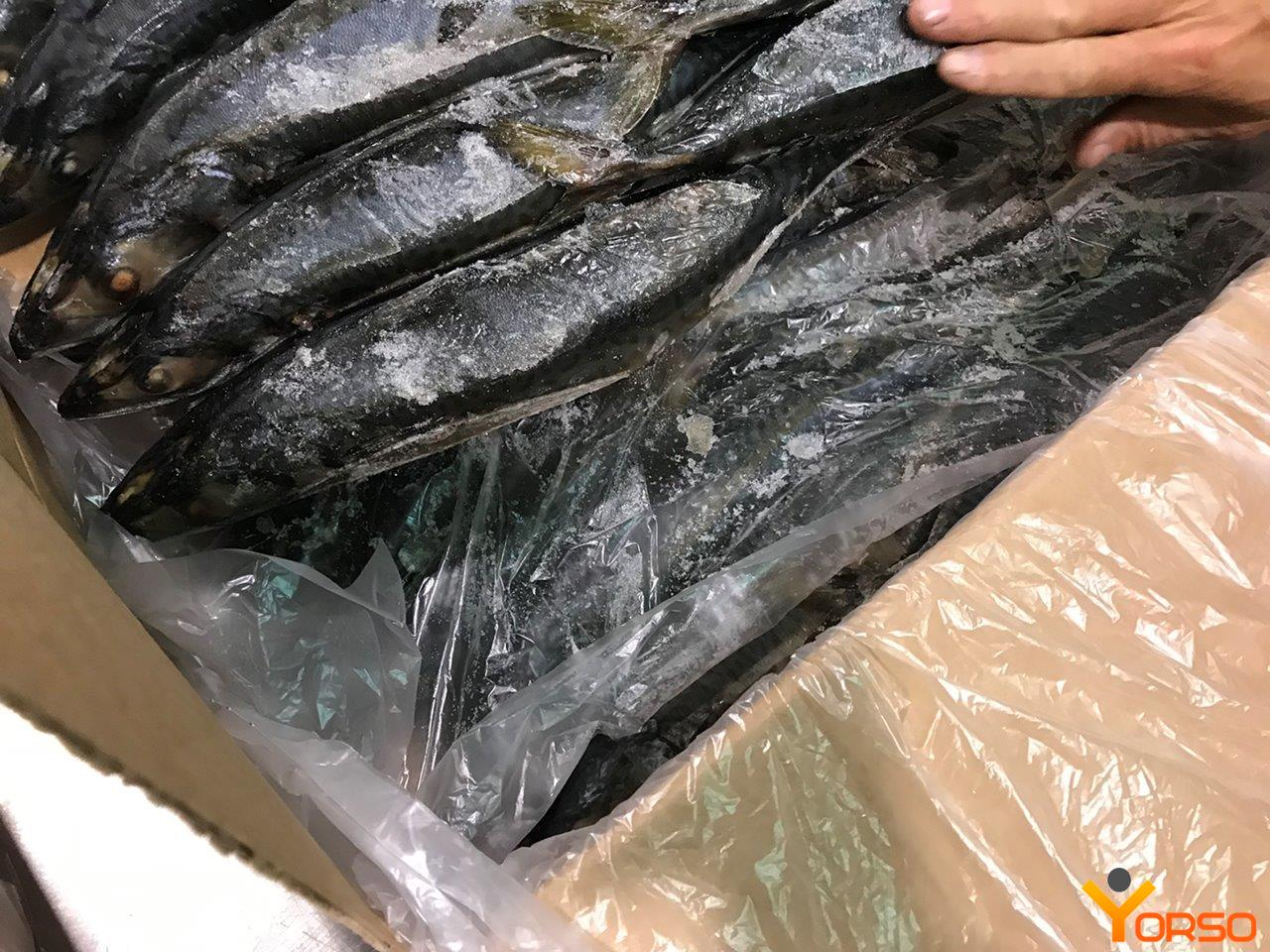 Mackerel WR, 23+ (0,3-1 kg), Atlantic, 1/20