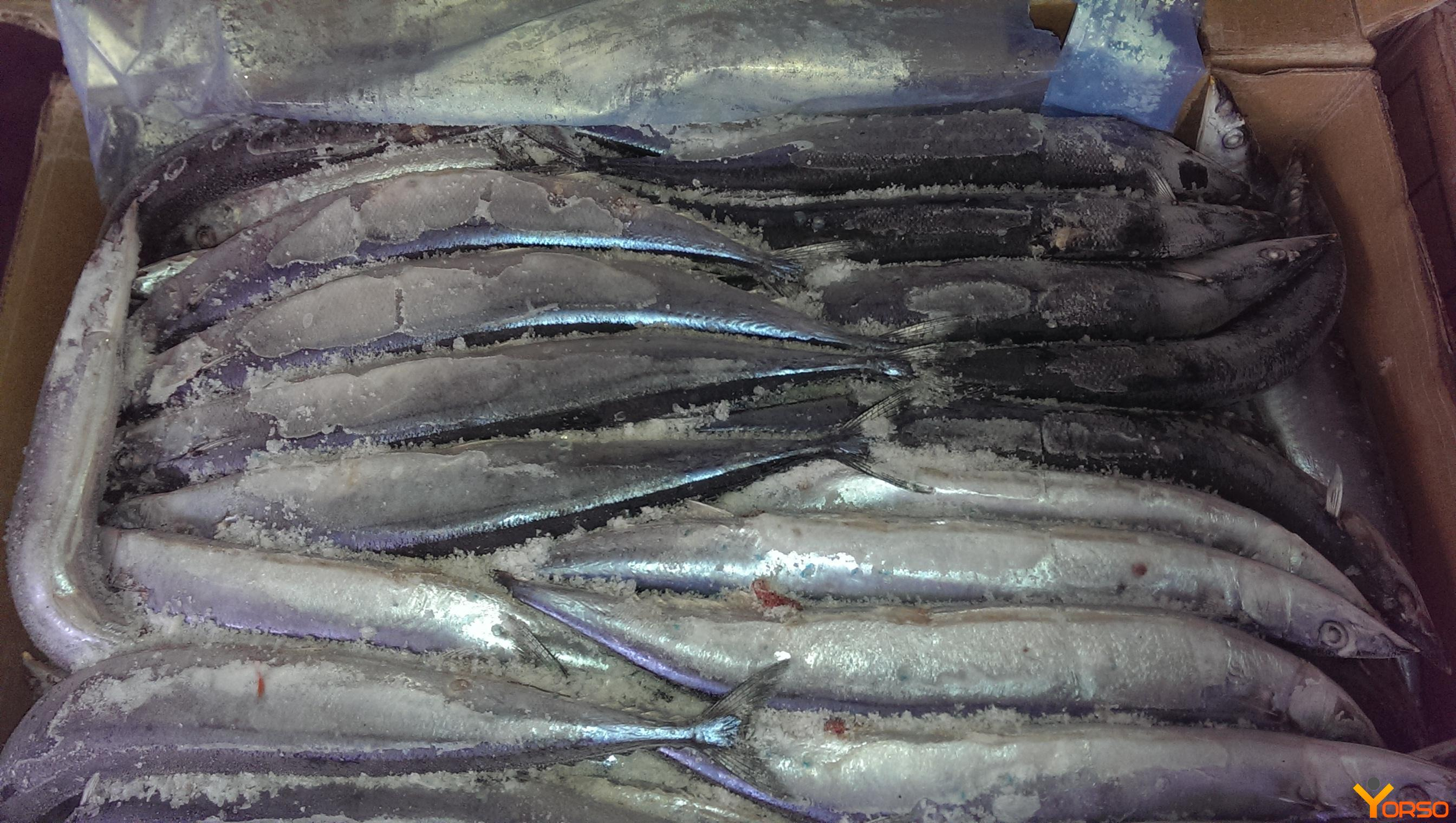 Saury, cm, HP, number 3 (80-100)
