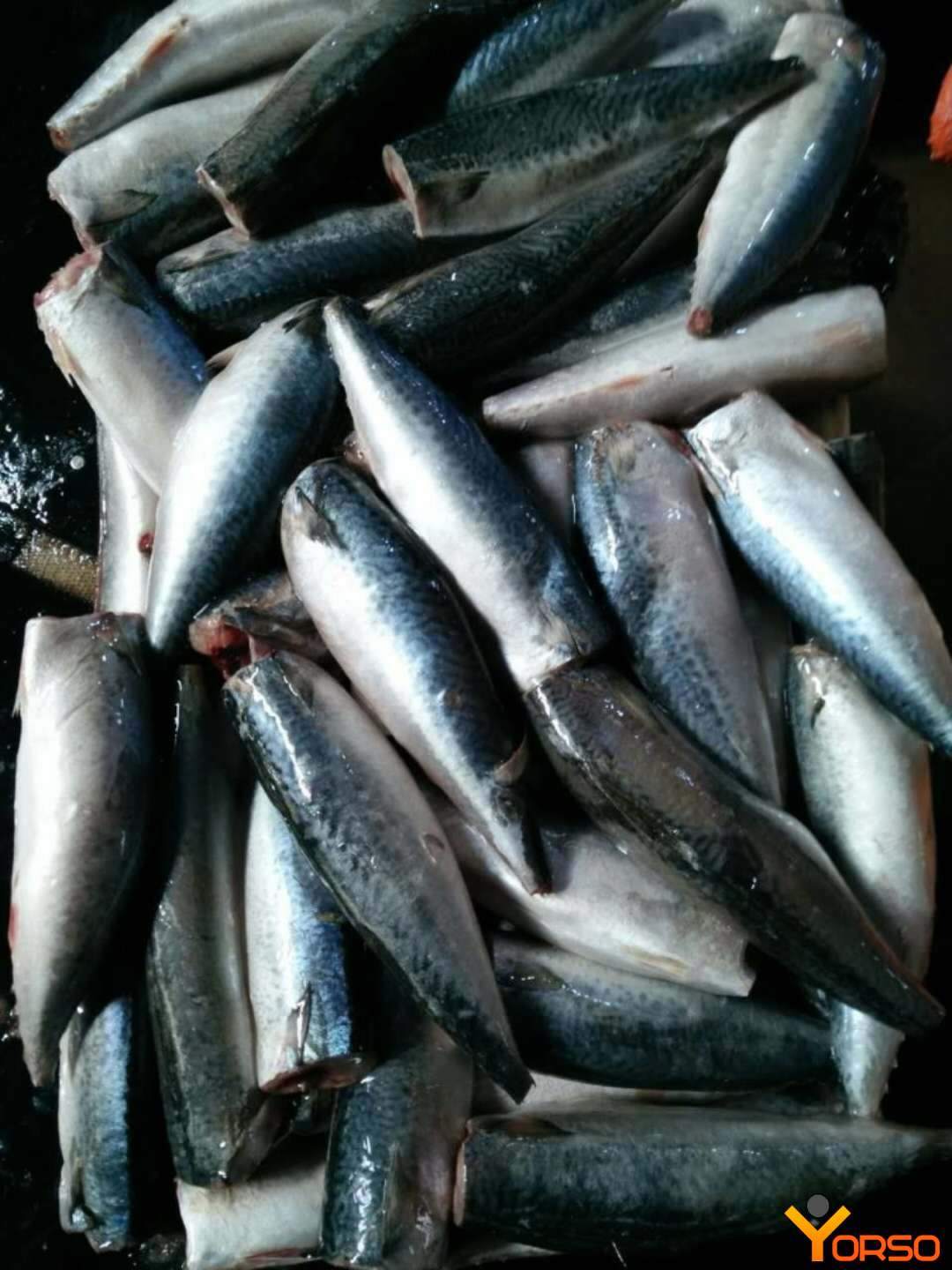 Mackerel, PBG, 80-100, 1/10