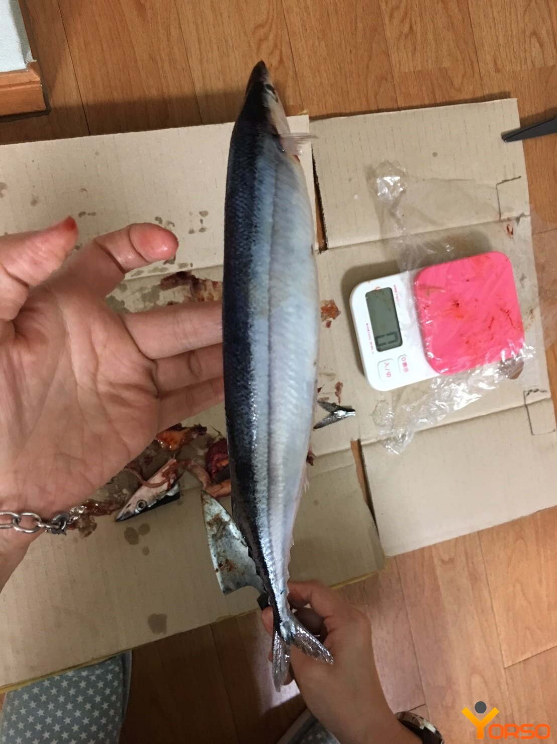 Saury, frozen, wr, number 3 (80-100)