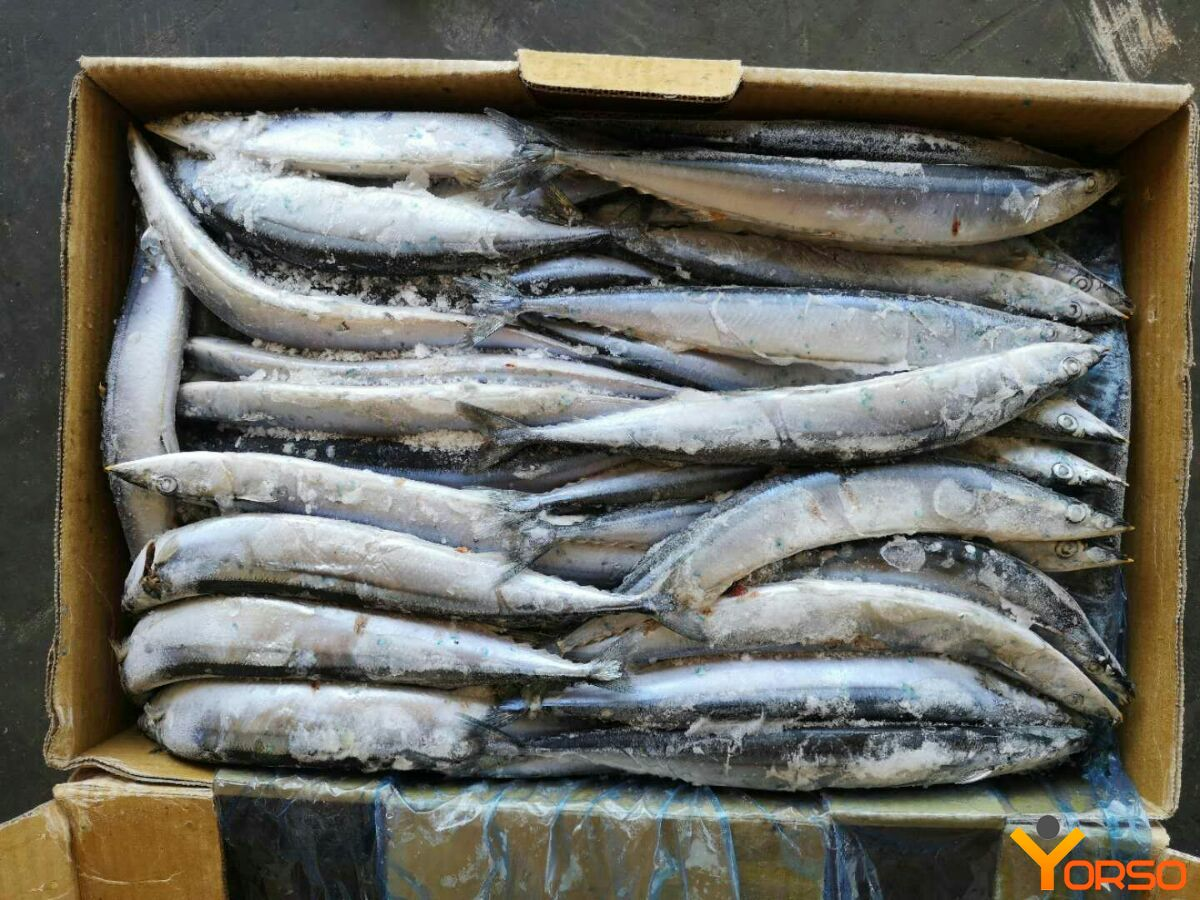 Saury, wr, number 3 (80-100), 1/10