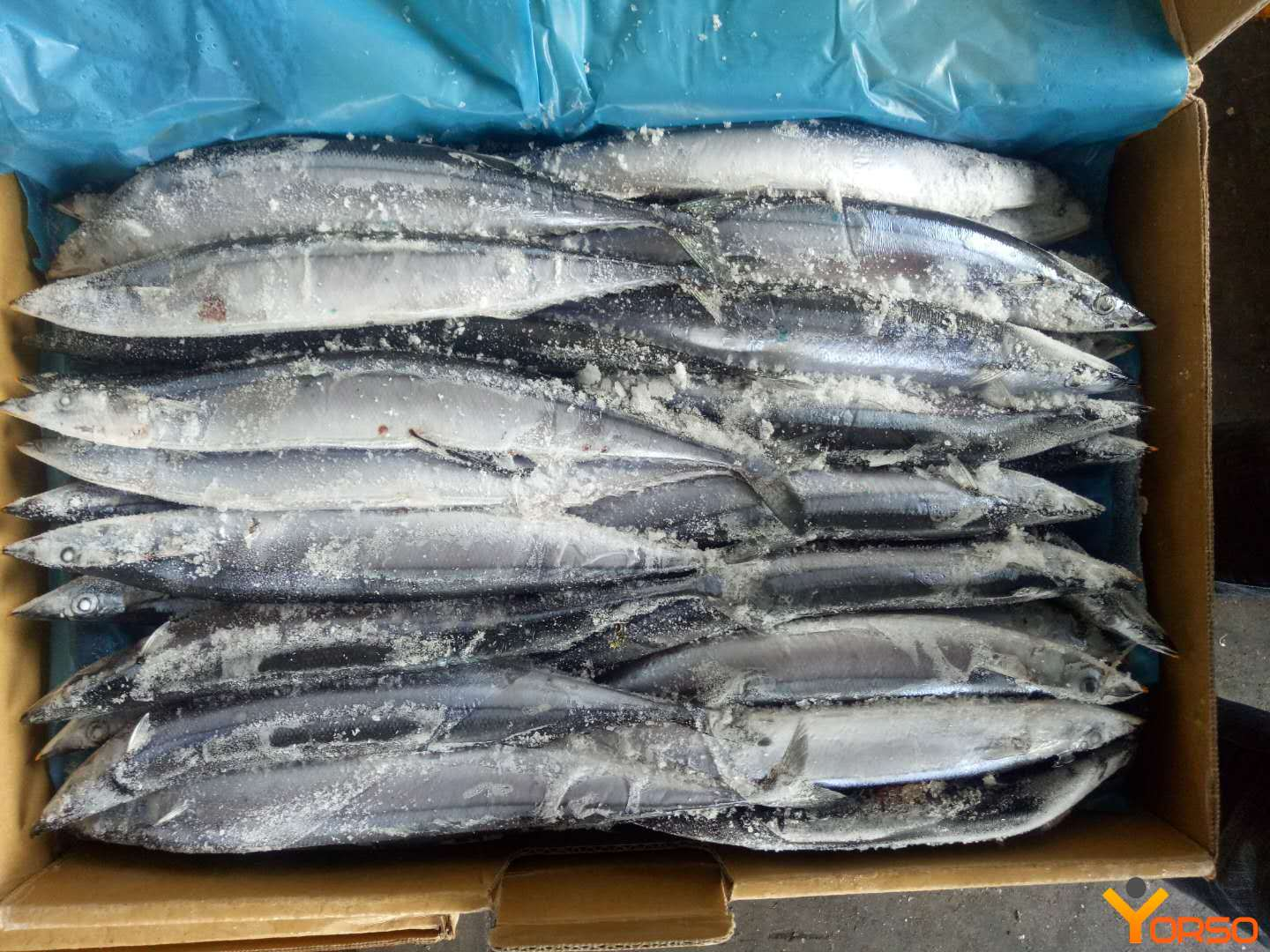 Saury, wr, number 1 (120-140), 1/10