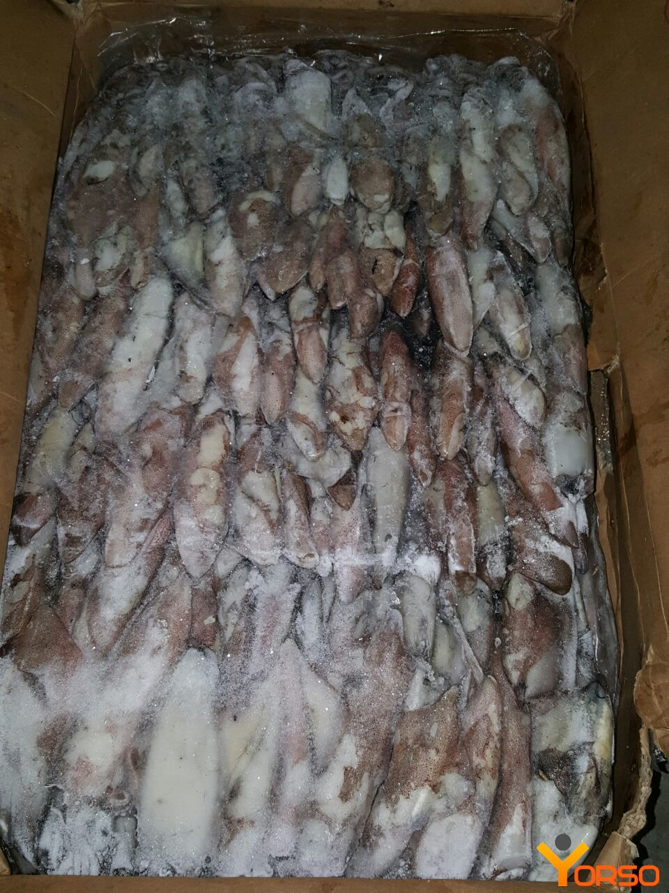 Squid carcass, 1/22